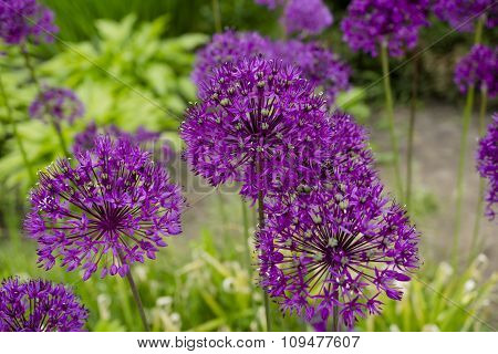 Beautiful Purple Flower With Sharp Leaves On A Green Background