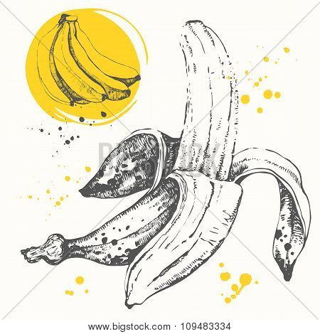Hand drawn banana. Black and white sketch of food.
