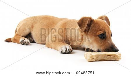 Puppy with toy bone isolated on white