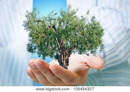 Businessman hands holding with care green tree concept