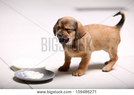Cute puppy eating on floor at home