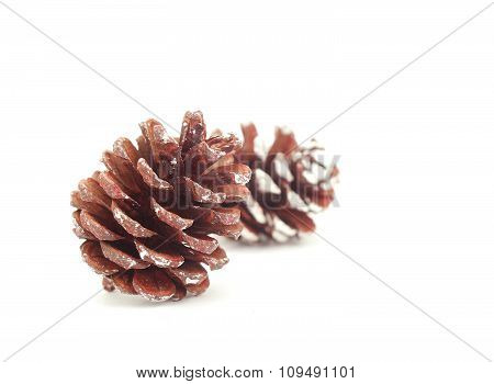 Brown Pine Cone Isolated On White