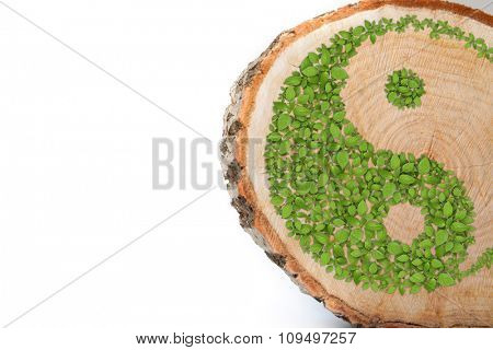 Cross section of tree trunk with Ying yang symbol of harmony and balance. Isolated on white background
