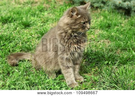 grey cat on green grass background