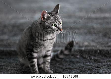 Beautiful cat on floor close-up