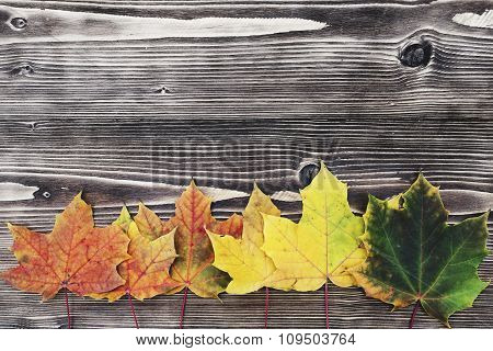 Autumn background with colored leaves on wooden board. Autumn background with copy space.