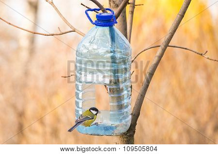 Great Tit And Birds Feeder