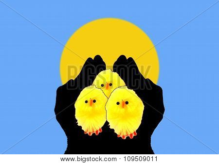 Chicks In Silhouetted Hands With Sun Background