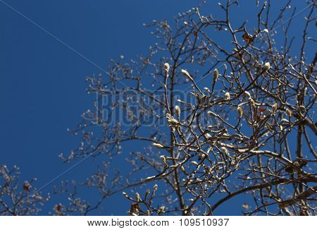 Willow On Blue Sky
