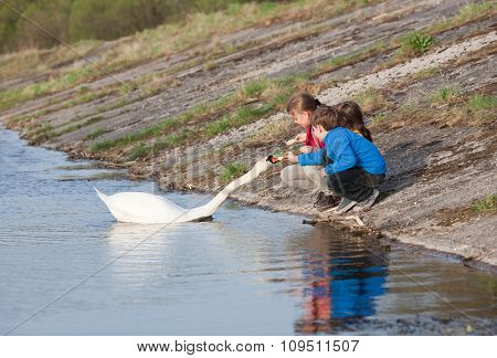 Children Feeding Swan