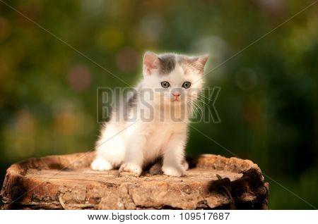Cute kitten two month outdoor