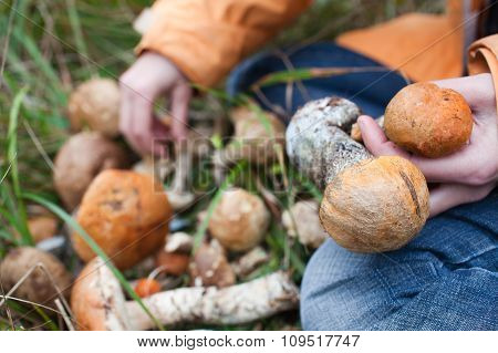 Harvest Of Fresh Wild Mushrooms