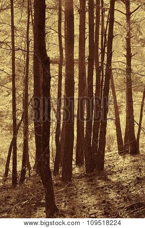 Autumn Forest Landscape In Warm Tone. Nobody