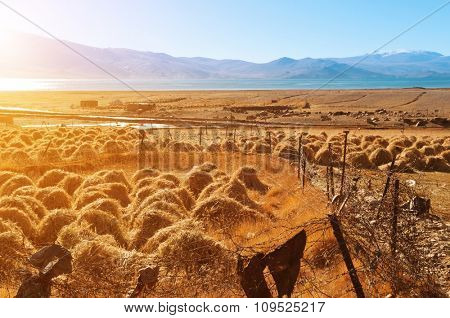 Old traditional hay stacks, rural scene in autumn at Tsomoriri lake, Ladakh, northern India.