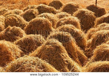 Close up old traditional hay stacks, rural scene in autumn at Tsomoriri lake, Ladakh, northern India.