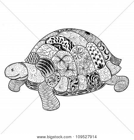 Turtle Doodle  Illustration