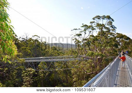 Tree Top Walk: Valley of the Giants, Western Australia
