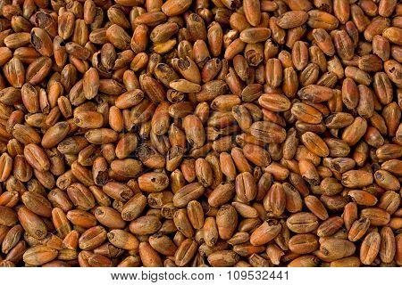 Caramel Wheat Malt