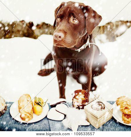 Very Sad Labrador And Holiday Treats