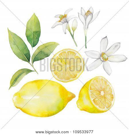 Watercolor lemon collection