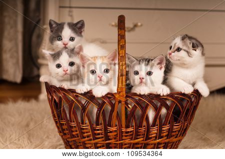 Five cute kittens in braided basket