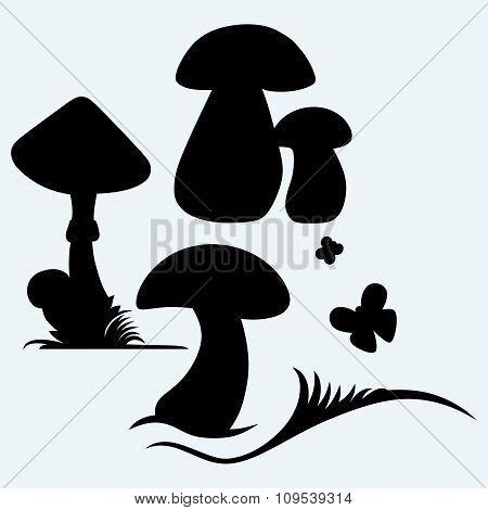 Boletus Edulis and mushroom Amanita