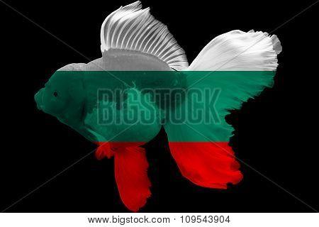 Flag of Bulgaria on goldfish