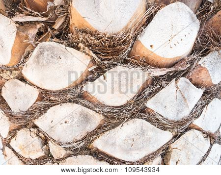 Palm Bark Forms