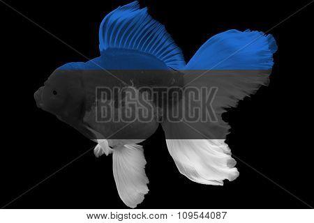 Flag of Estonia on goldfish