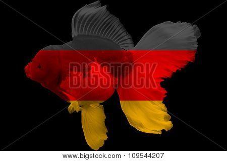 Flag of Germany on goldfish