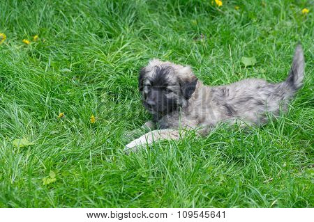 Stray puppy having rest in spring fresh herbs