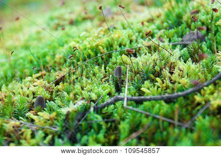 Moss in forest.