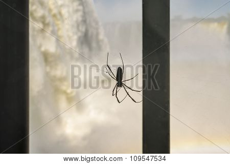 Black Spider And Iguazu Falls At Background