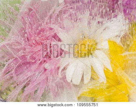 Organic Abstraction With Chamomile Flowers