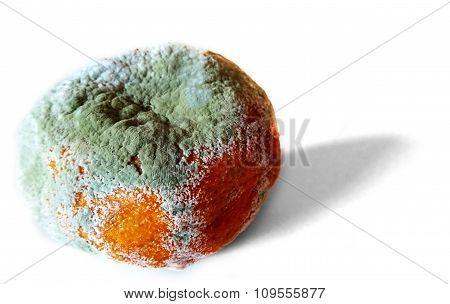 Rotten Tangerine