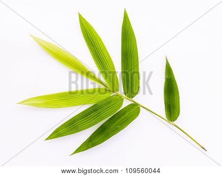 Fresh Bamboo Leaves Border With Water Drop Isolated On White Background, Botanical Zen Forest, Tropi