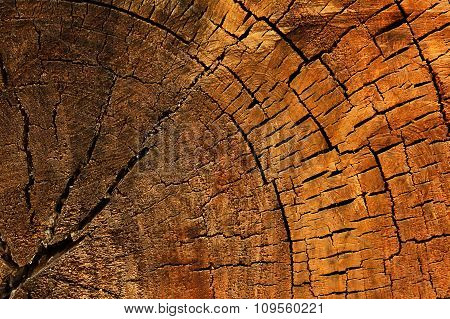 Wood Texture Of Cut Tree