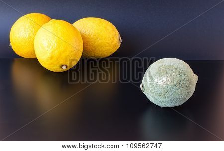 Moldy And Healthy Lemons