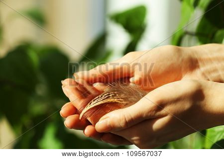 Hands holding a feather on green leaves background, close-up
