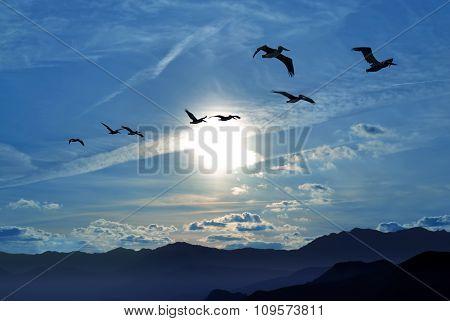 Birds Flying Away