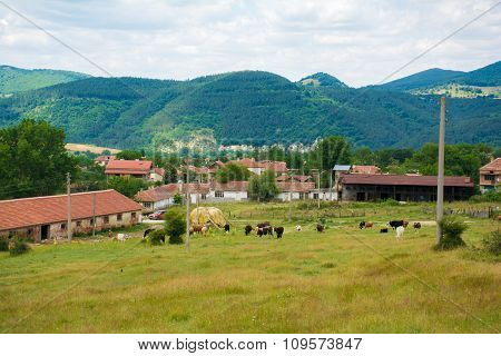 Beautiful rural views of houses and cows in the mountains