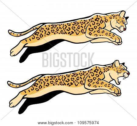 Jumping Leopard