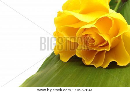 Yellow Rose And Green Leaf