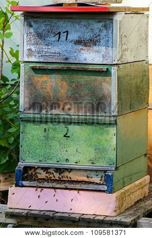 Honey Bees swarming near the old vintage wooden beehive boxes