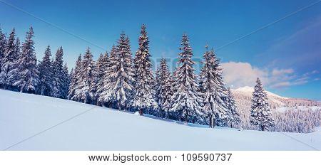 Fantastic winter landscape. Blue sky. Panoramic landscape. Carpathian, Ukraine, Europe. Beauty world.