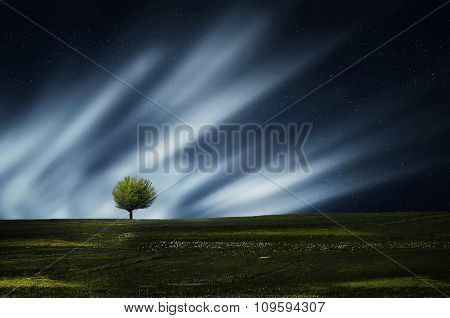 Lone tree at night with clouds