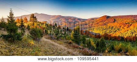 Majestic colorful landscape with sunny beams at mountain valley. Natural park. Dramatic morning scene. Red autumn leaves. Carpathian, Ukraine, Europe. Beauty world.