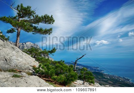 Pine Trees Growing On Top Of A Cliff