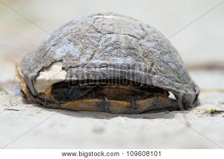 Dead Turtle