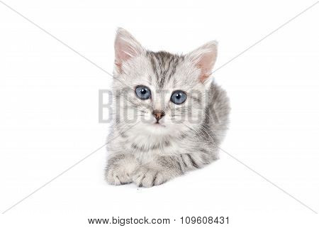 Lovely gray kitten on a white background